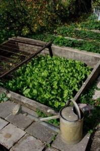 Saladjpeg