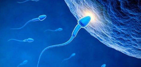 canabis-macht-spermien-scharf